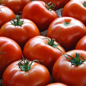 Pomodoro / Tomat